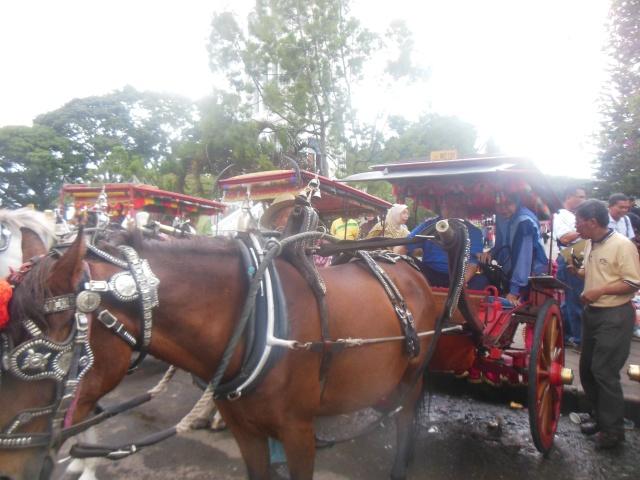 Menaiki kereta kuda di Bukit Tinggi